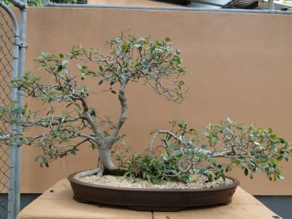 Section bonsai