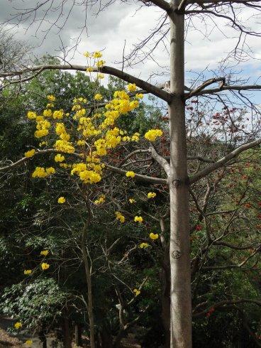 Un arbre fleuri
