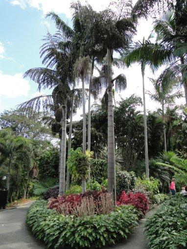 De beaux palmiers...