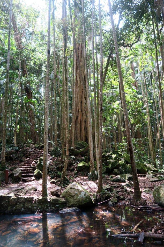 Joalah - Forest (8)