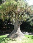 Un arbre etrange...