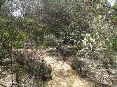 Vegetation seche