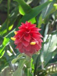 Adelaide - Botanic Garden - Flower 2