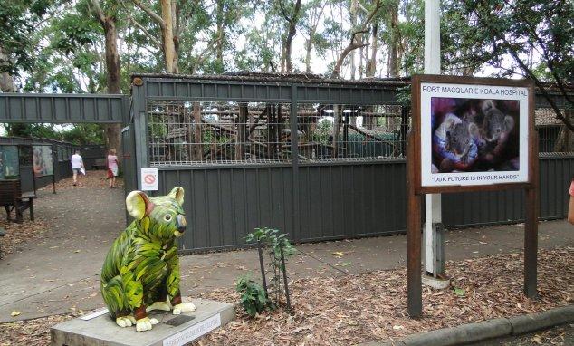 Post - Pacific - Koala Hospital