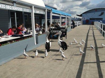 Des pelicans et des mouettes !