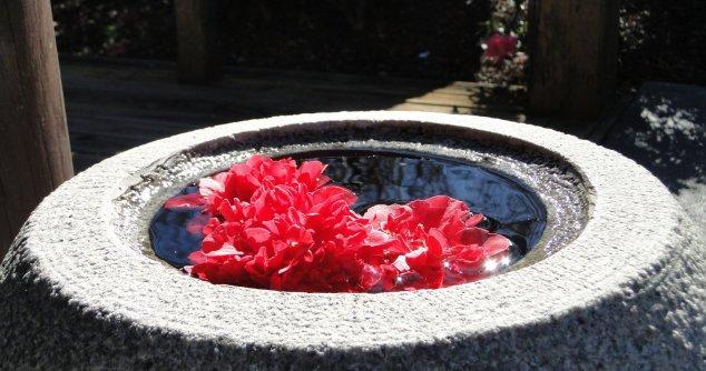 Post - Hunter Valley - Garden - Japanese Garden (6)