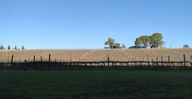 Post - Hunter Valley - Where is Kangaroo
