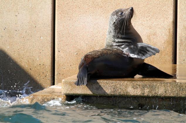 Post - Press Review - Seals
