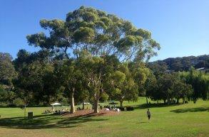 Garden - Rosherville Reserve