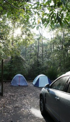 Green Patch - Tents